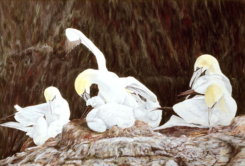 Bowing Gannet, Private collection, USA