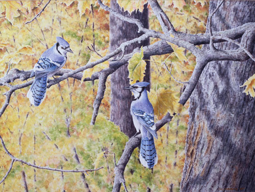 Autumn Jays, Private collection, New-Carlisle, Quebec