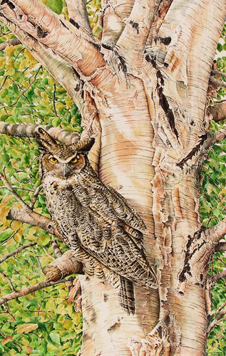Great-Horned Owl, Private collection, Chandler, Quebec