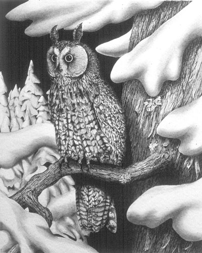 Long-eared Owl, Private collection, Ontario