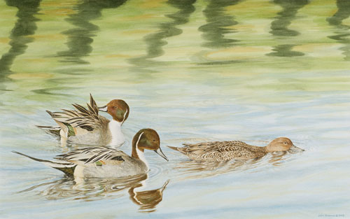 Pintails, Private collection, USA