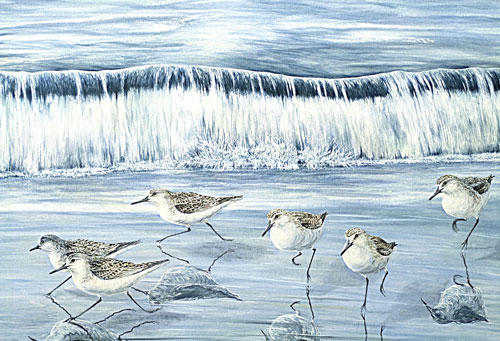 Sanderlings, Private collection, Switzerland